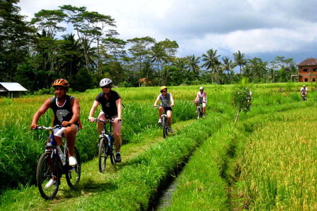 Lombok Cycling Trip to Ricefields